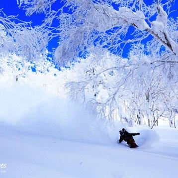 photo : SHIN OTSUKA